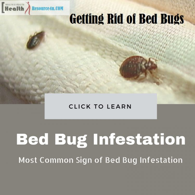 Ways to Get Rid of Bed Bugs