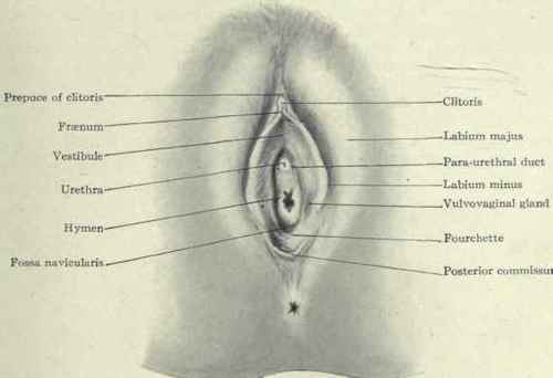 female hymen location