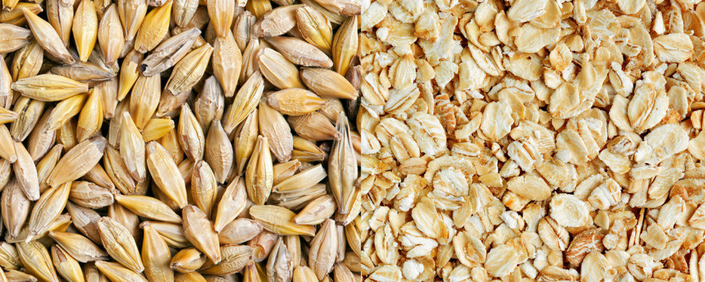Oats or Barley