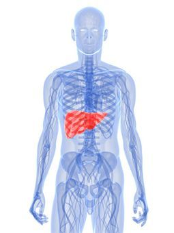 Pain On Right Side Below Ribs >> Liver Pain - Causes, Location, Symptoms And Treatment