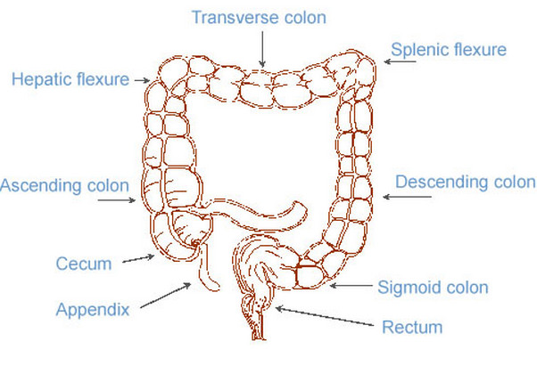 Splenic Flexure Syndrome -Causes , Pictures, Symptoms  and Treatment