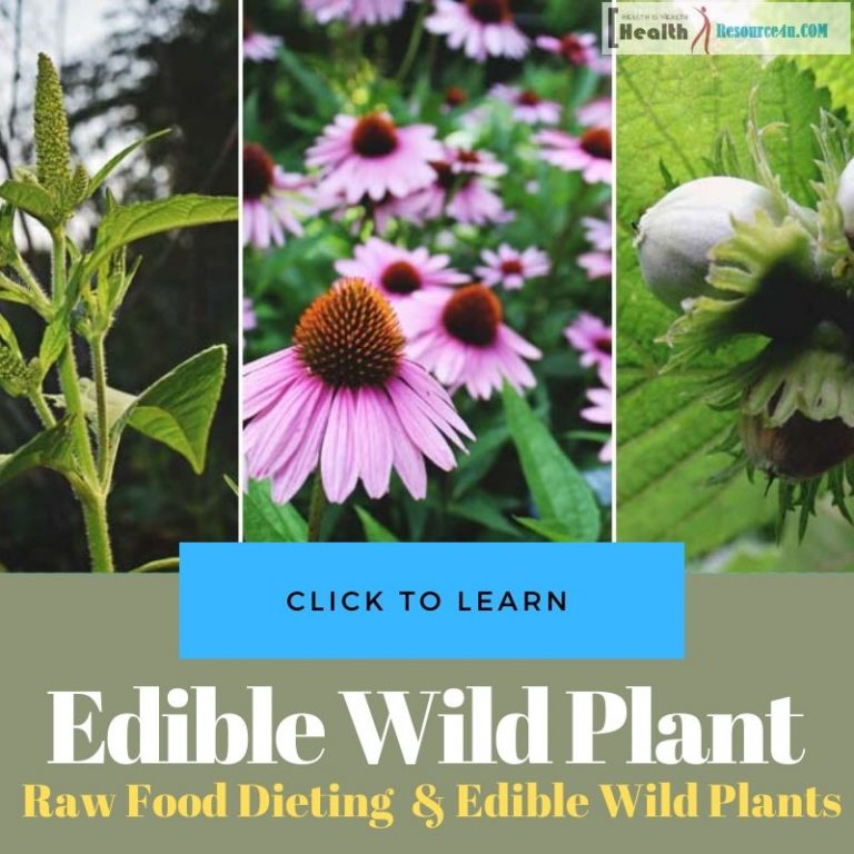 Raw Food Edible wild plant Dieting