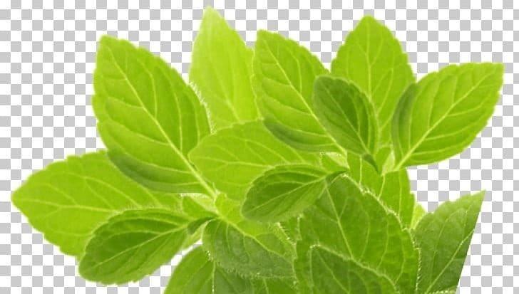 herbs for hepatitis
