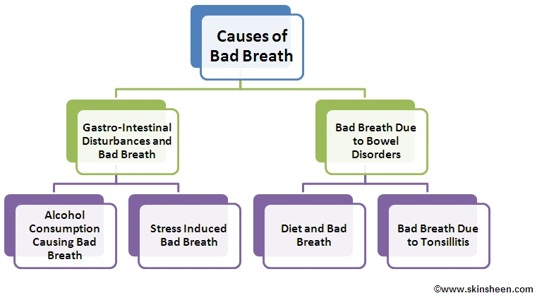 chronic bad breath : causes, diagnosis, treatment and prevention, Human Body