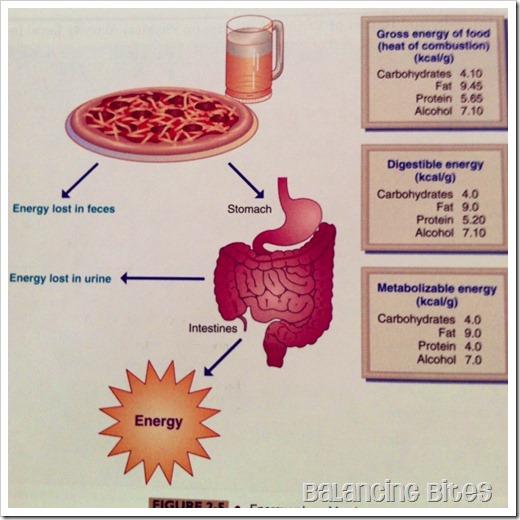 how calories work
