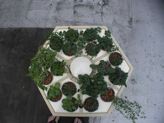 Basil, Thyme, Rosemary