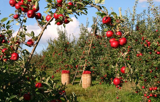 apple 1873078 340