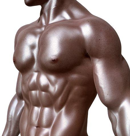 bodybuilder 331670 480