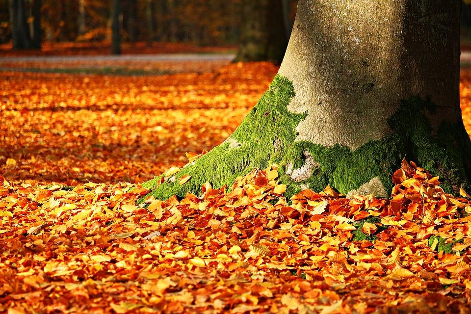 fall foliage 1913485 960 720