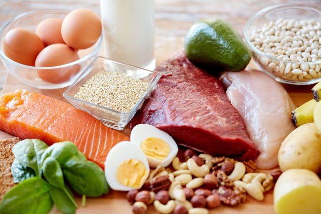 protein diets