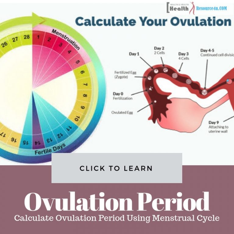 Ovulation Period Using Menstrual Cycle