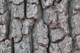 Oak Barks