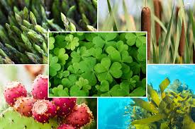 Raw food dieting with edible wild plants